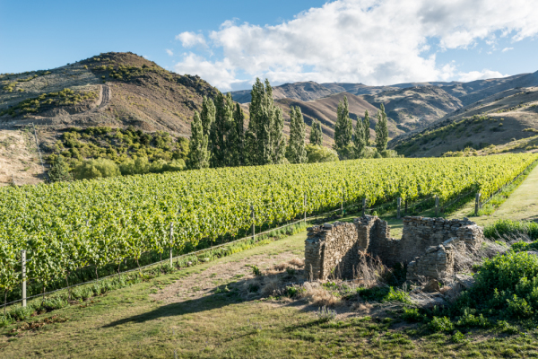 Stewart Town Vineyeard, Cromwell, New Zealand Wine, Export Wine, Central Otago, Queenstown,Vineyard, Weddings, Corporate